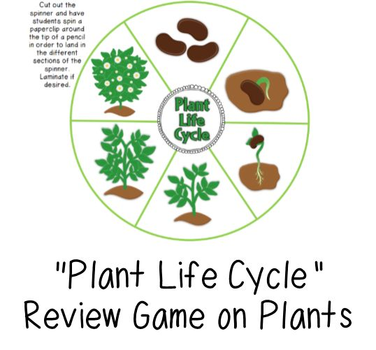 """FREE game to help review your unit on plants!  FIND THIS GAME UNDER THE """"SCIENCE"""" HEADING ON THIS PAGE!"""