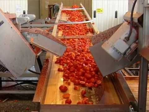 How Sun Dried Tomatoes are Made........interesting video. Fun Fact: Tomatoes are the most consumed fruit in the U.S.
