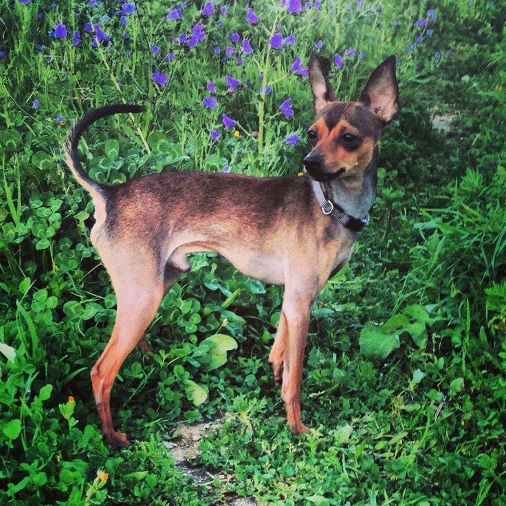 Django já faz parte da comunidade AMA. Vem descobrir a melhor rede social para animais e encontra o par perfeito para o teu animal de estimação. Junta-te à nossa comunidade e faz-te amigo de Django