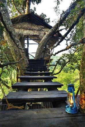 Tree Tops Jungle Lodge, Sri Lanka.