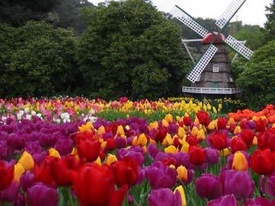 .::: Lovelies in Holland. Lorr