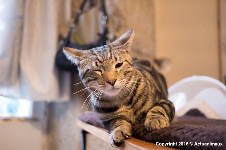 GINO: chat en urgence vétérinaire, fracture du col du fémur, date butoir 5 mars 2016