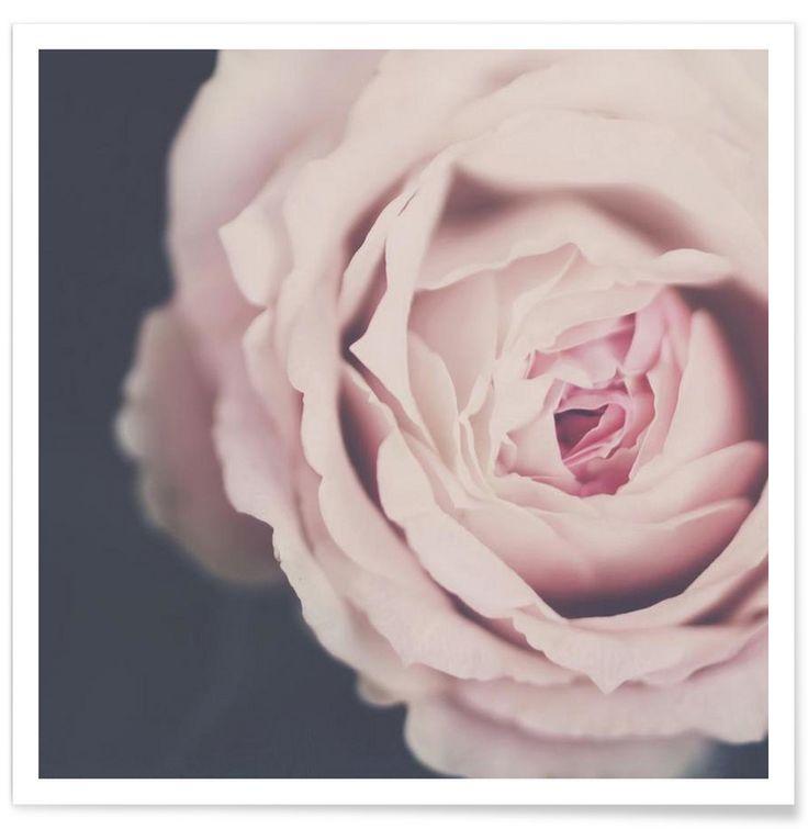 Rose Pink by Ingrid Beddoes
