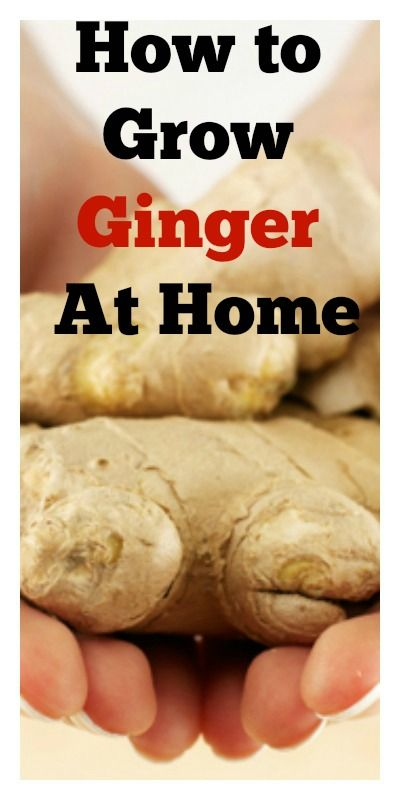 How To Grow Ginger At Home... hey, maybe the Doctor can uss these tips and finally be ginger! X0DD ahhh im not funny