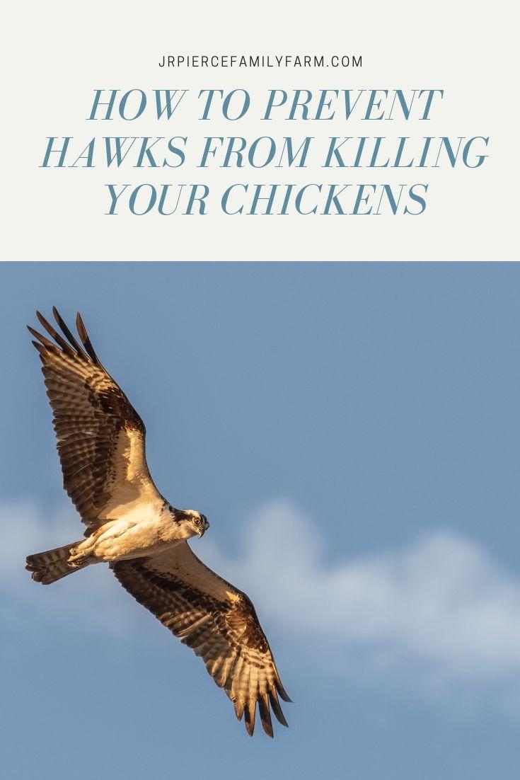 275c996199122108c825faac3210c4e0 - How To Get A Hawk Out Of A Building