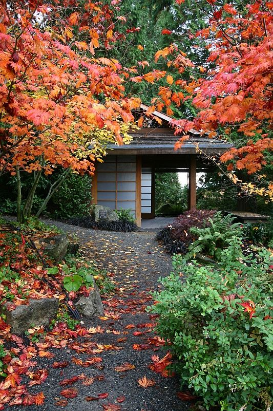 36 Best Images About Fall Autumn In Bellevue On Pinterest