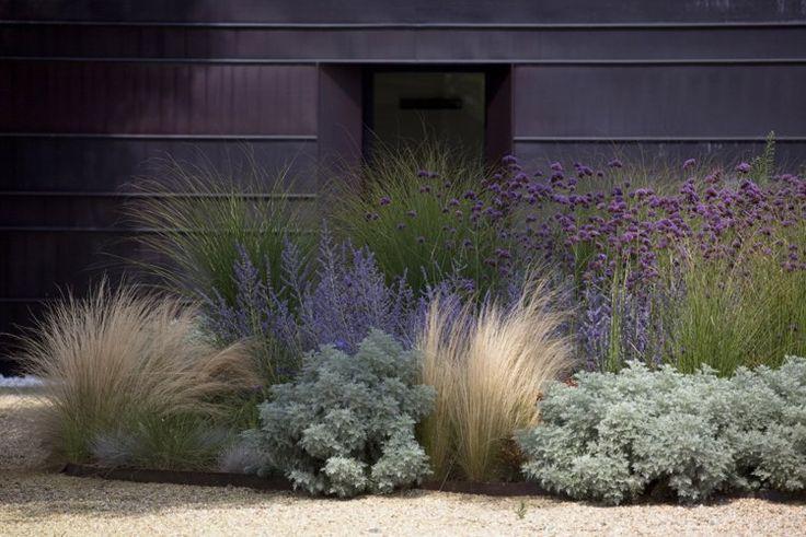jardinet nécessitant peu d'entretien aménagé avec des massifs de lavande, de graminées d'ornement et de cinéraire maritime