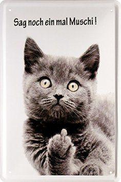 1000 ideen zu lustige katzenbilder auf pinterest lustige k tzchen grumpy cat humor und. Black Bedroom Furniture Sets. Home Design Ideas