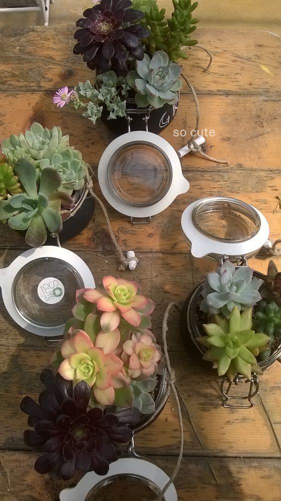 barattoli di conserva pieni di succulente vive da scrivere e riscrivere