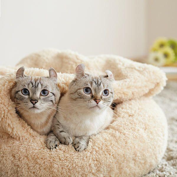 抗菌防臭ふんわりブランケット付ベッド(犬用・猫用ベッド) - 犬用品・ドッグフード通販ならペット用品 ペピイ