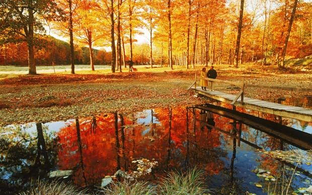 **New England fall foliage: trip of a lifetime (UK telegraph) - WHERE to see leaves, and HOW (drive, train tour, bus tour)