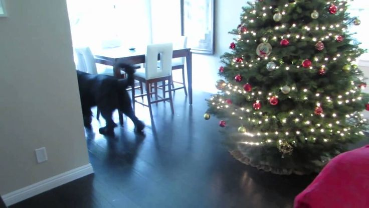A giant black Newfoundland dog named Sebastien plays an adorable game of hide-and-seek with a little blonde girl who played the game very well when she found a hiding place behind the couch.