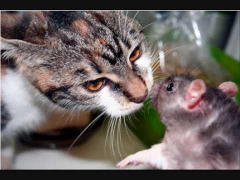 A great slideshow of unusual animal friendships.  Wouldn't it be wonderful if mankind could follow their example??