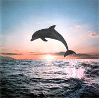 Lovina Beach - Bali ; the beautiful beach which we can swim and play with dolphins