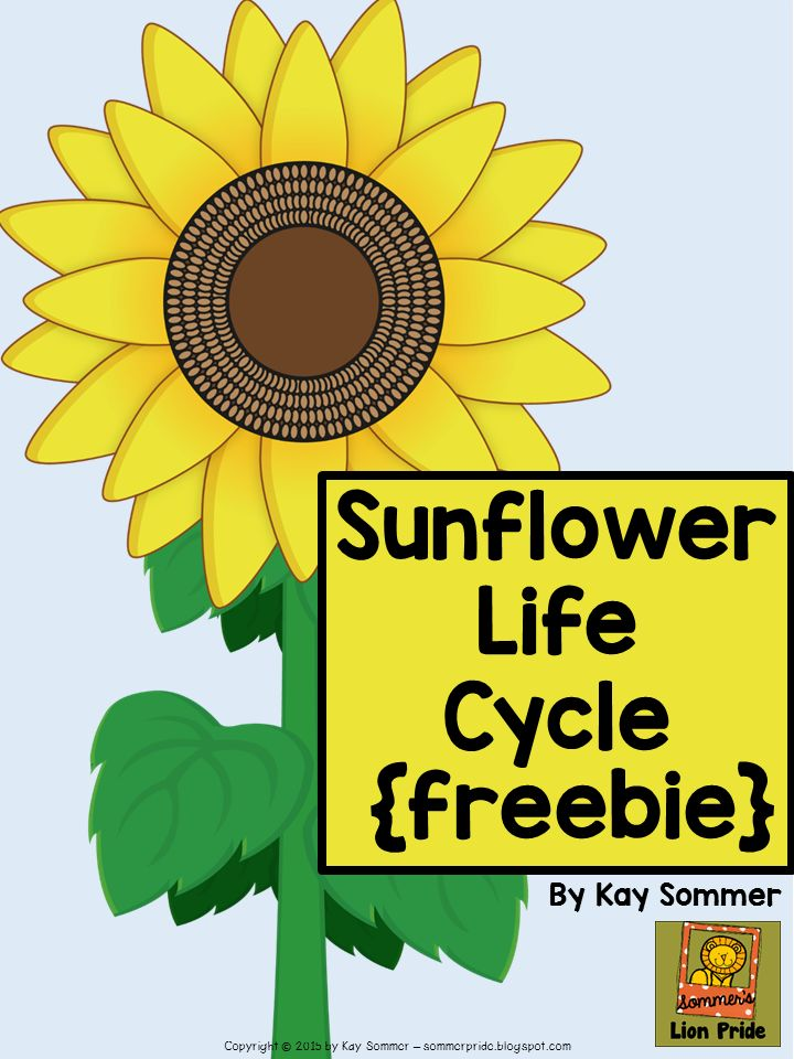 Sommer's Lion Pride: Sunflower Life Cycle {FREE}