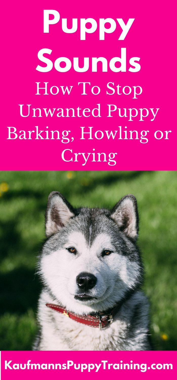 31 Best Pets Training Images On Pinterest Doggies