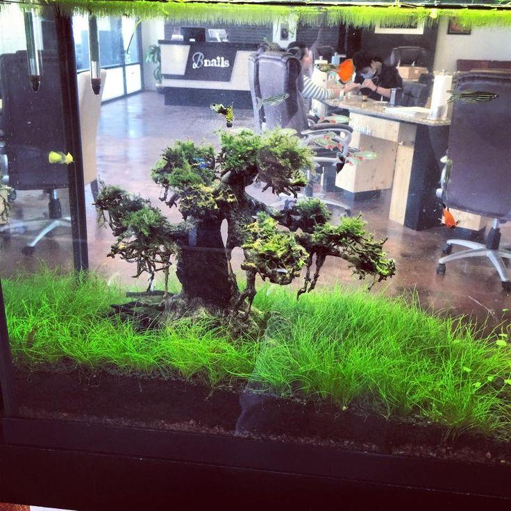 17 Best Ideas About Driftwood For Aquarium On Pinterest