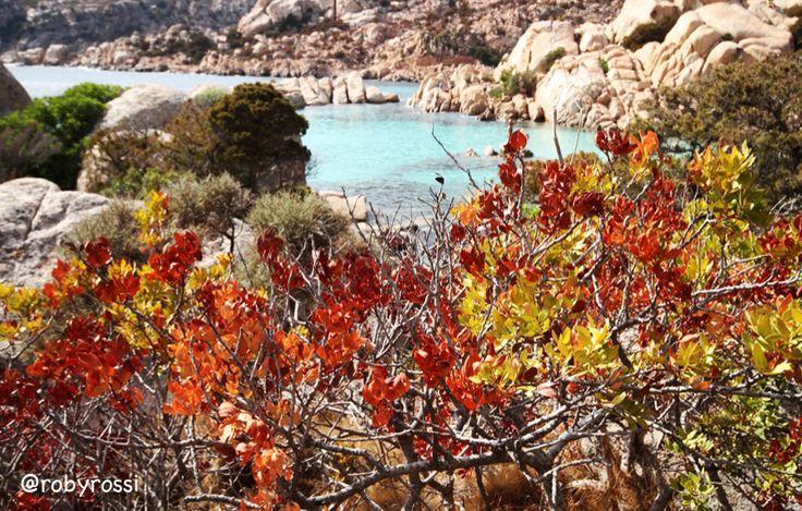 millecolori.... Cala Coticcio, Isola di Caprera - Gallura