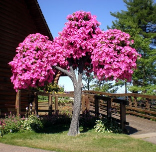 Tree trunks and limbs are made by artist Earl Senchuk but the petunias are very real. Who wouldn't want a petunia tree?