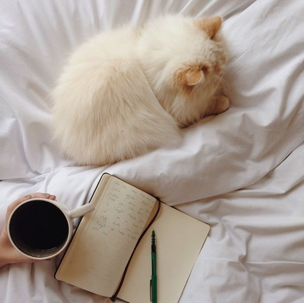 OMG! The simple pleasures in life. Coffee, reading and cuddles with cats