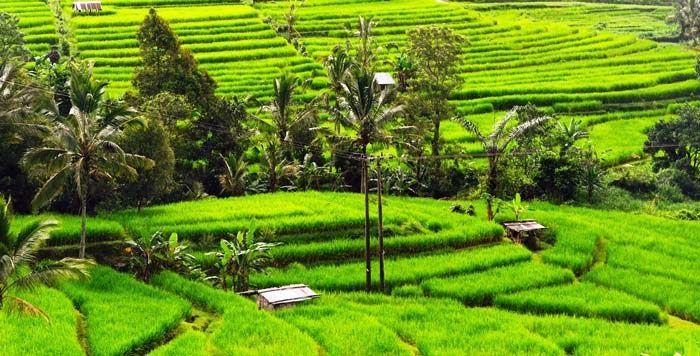 Foto Pemandangan Alam Pedesaan Yang Indah Jatiluwih Bali Objek Wisata Pemandangan Sawah Terasering Download 8 Hotel Murah Di Ba Di 2020 Pemandangan Pedesaan Alam