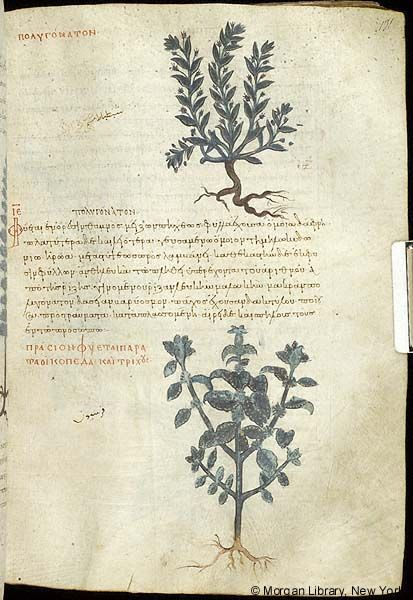 De materia medica, MS M.652 fol. 131r - Images from Medieval and Renaissance Manuscripts - The Morgan Library & Museum