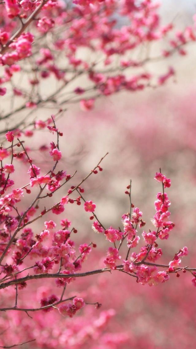 iPhone wallpaper bloom flowers