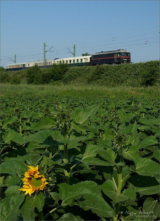 A summer bouquet of special trains | Hungary