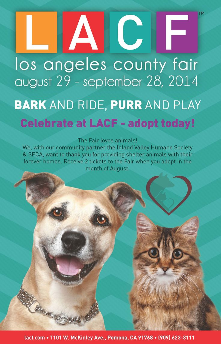 Breaking News!  Thanks to our friends at the LA County Fair we are pleased to announce when you adopt from IVHS & SPCA you will receive two complimentary tickets to the fair. Tickets will be given out from August 1st – August 31st.  ADOPT TODAY!! http://www.ivhsspca.org/adoptions-find-your-somebuddy/adopt-today