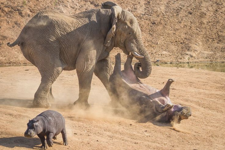 Wildlife photographer Rian van Schalkwyk captured the spectacular scene as he watched the animals grazing at a safari park in Namibia