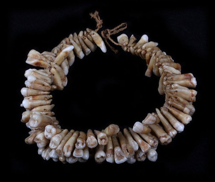 19th C Fijian Human Tooth Necklace Pretty Dead Things