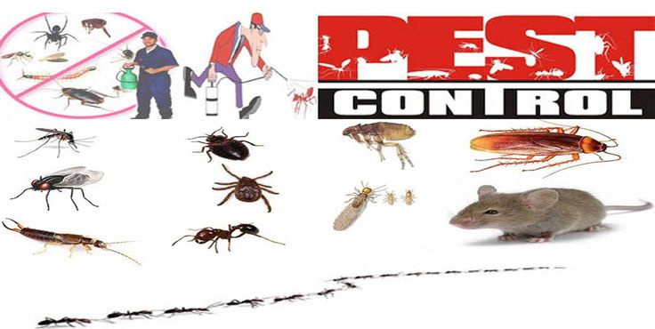 Ingin Membasmi Hama dan Serangga dengan Mudah? Gunakan Saja Jasa Pest Control di DKI Jakarta
