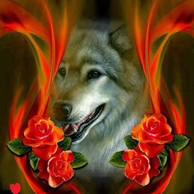 форме, размерам фото волк с розой в зубах указанным