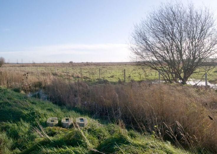 Рейнхемские болота: память места