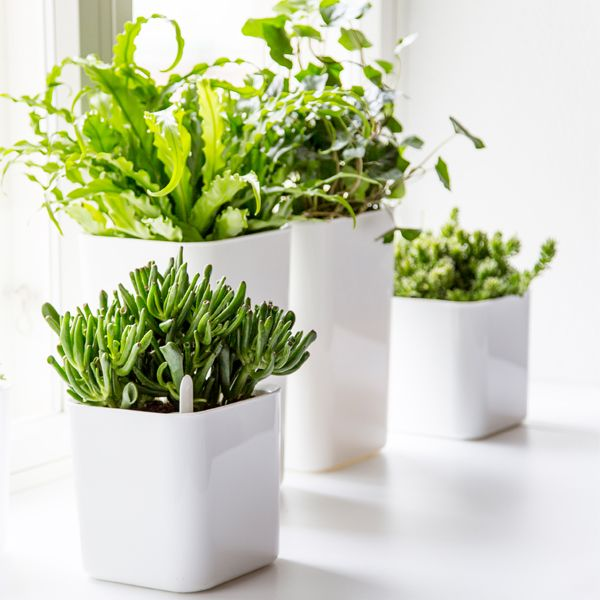 Eden pots by Pentagon Design for Orthex.
