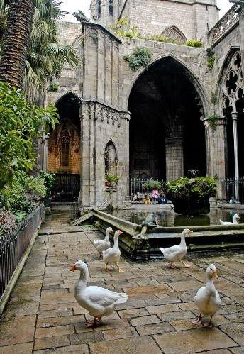 En el claustro de la Catedral de #Barcelona viven 13 ocas que representan la edad de Sta Eulalia cuando fue martirizada http://www.viajarabarcelona.org/lugares-para-visitar-en-barcelona/la-catedral/ #turismo #Catalunya