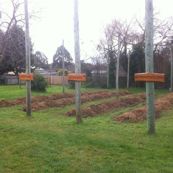 The hop garden in winter