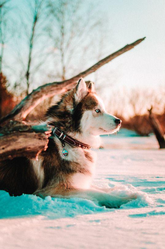 Huskies Adventures