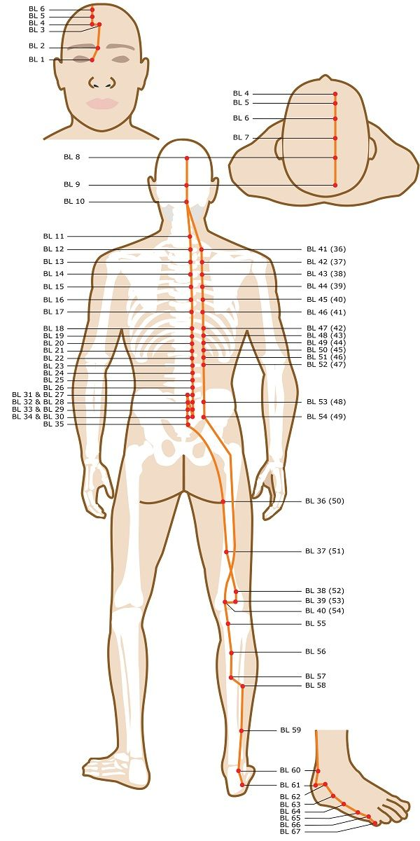 Acupuncture Points On Your Legs & Feet | Nokta