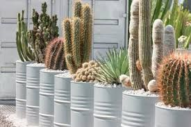 Výsledok vyhľadávania obrázkov pre dopyt tahave rastliny na balkon