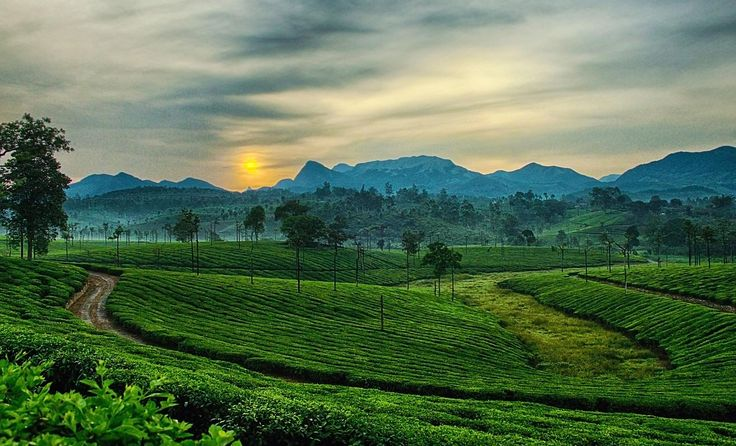 Surreal landscape in ooty, India