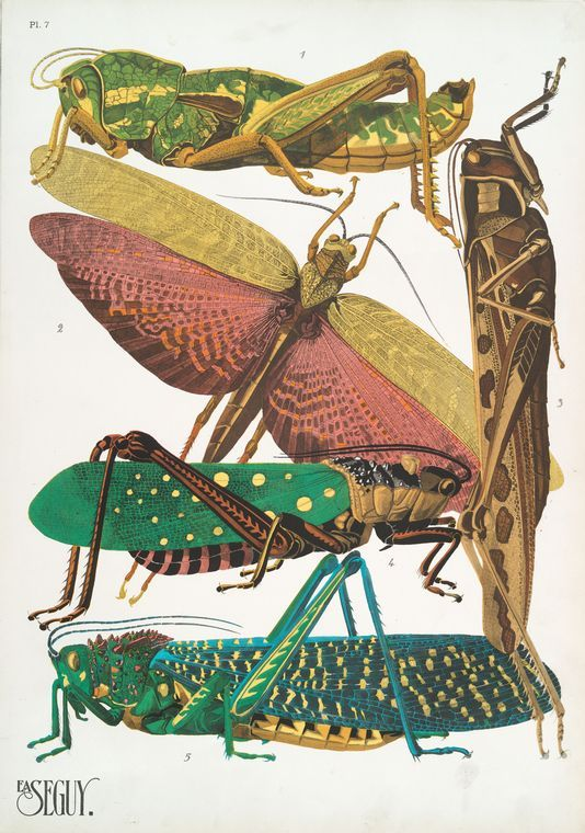 """""""Insectes"""", pl.7, by E.A. Seguy."""