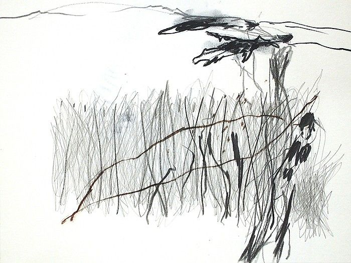 Line Drawing Grass : Best draw images drawings artists and printmaking