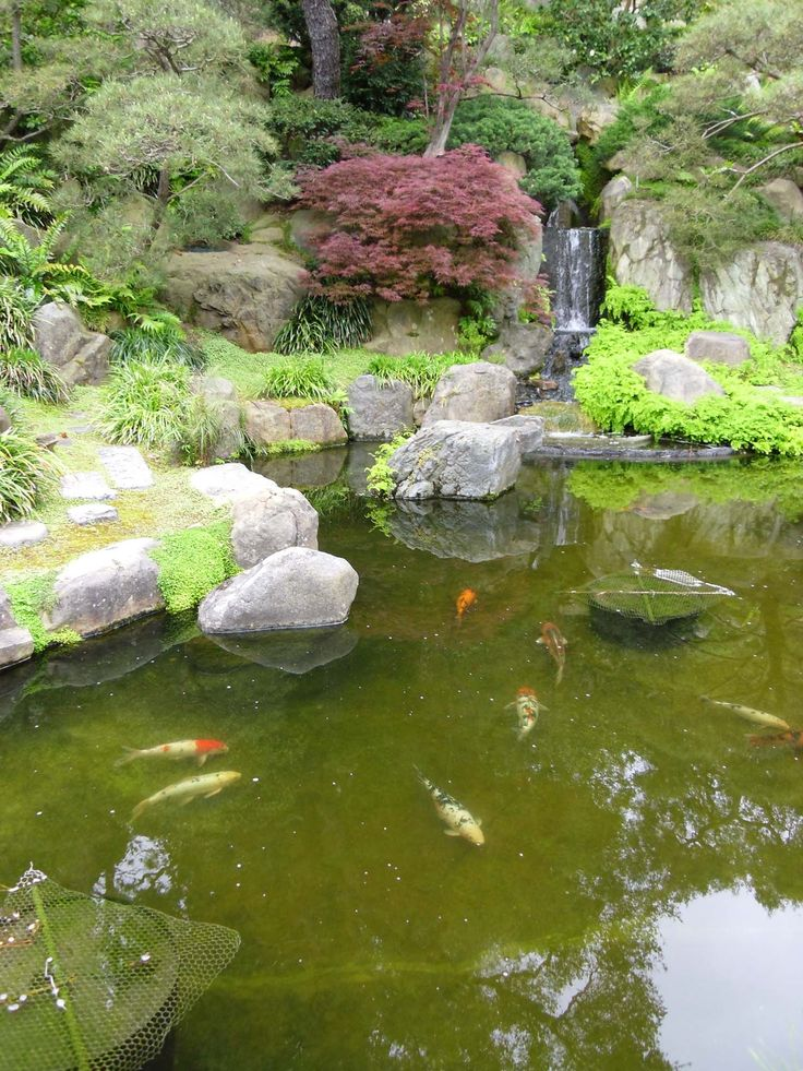 9 best ponds images on pinterest backyard ideas garden for Japanese garden pond design