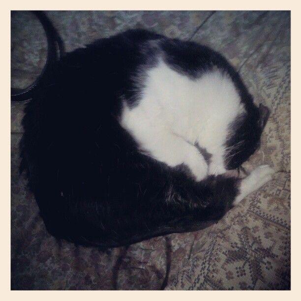 """Soft Koshi, Warm Koshi, Biggest ball of fur~~~"" Photo by 8bitboo on Instagram"