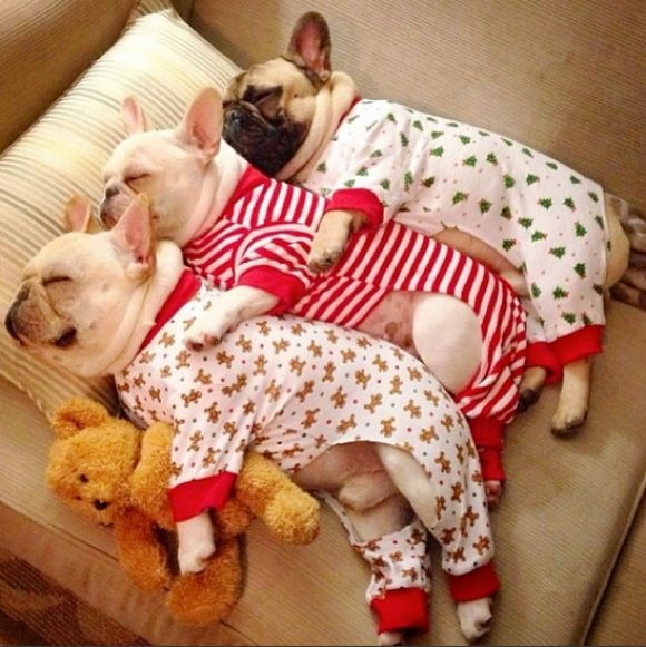 I love the PugJamas!