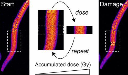 Radiation Dose Limits for Bioanalytical X-ray Fluorescence Microscopy