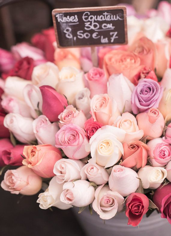 Paris photo - Mauve a augmenté et Français de pêches Roses, printemps à Paris…