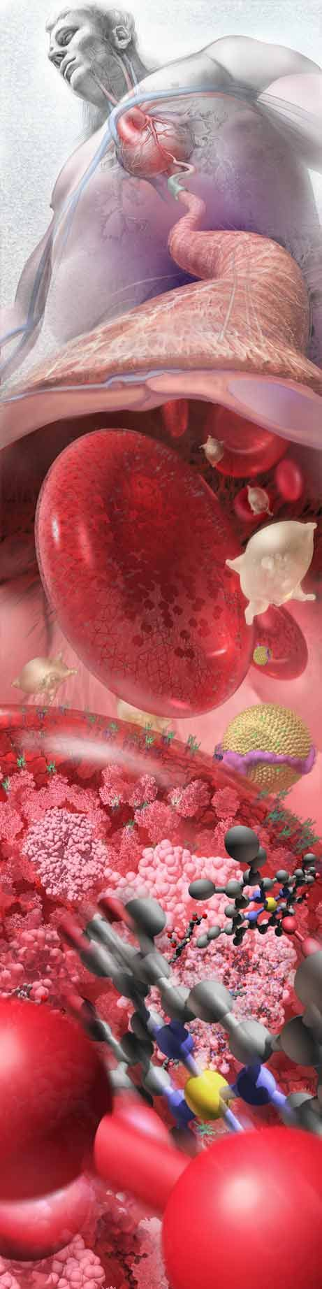 "First Place in Illustration category of 2008 International Science and Engineering Visualization Challenge:  ""Zoom Into The Human Bloodstream"" by Linda Nye"