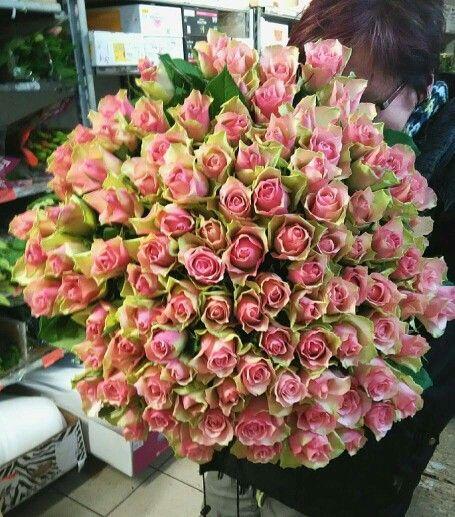 100 růží Belle Rose